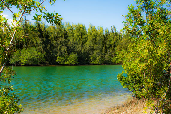 Oleta River State Park in Miami